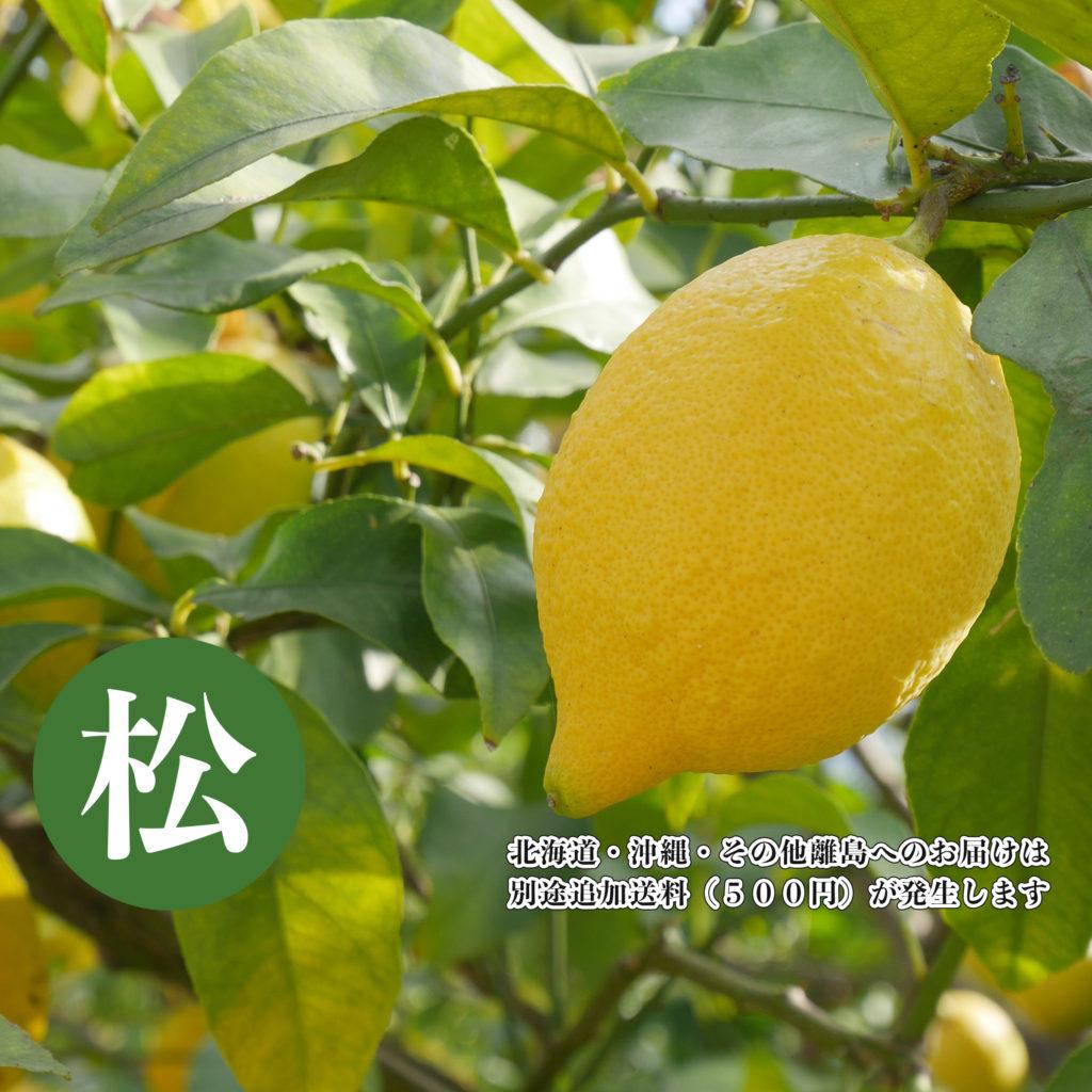 【松:最高級品】DOHO STYLE 道法レモン